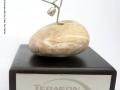 Terason-Pinnacle-Award-Cape-Town.jpg